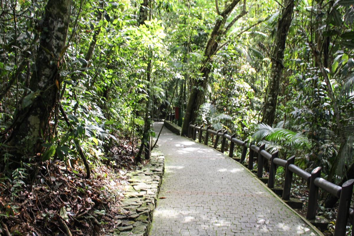 Bosque parque unipraias